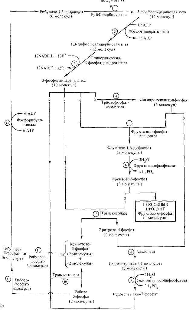 в процессе фотосинтеза