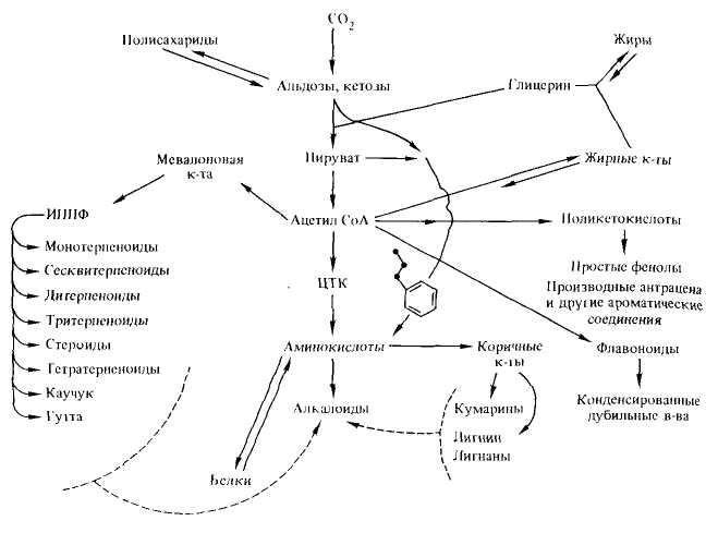 Упрощенная схема фотосинтеза